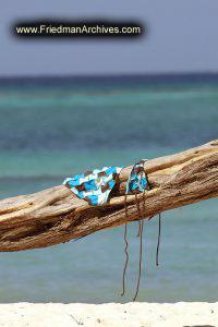 Bikini on Tree