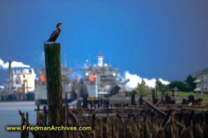 Bird on Log - Industrial Background