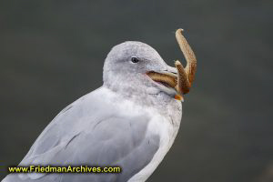 Bird with Starfish