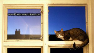 Cat on Window Sill