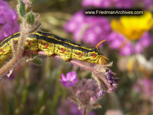 Caterpillar on Flower