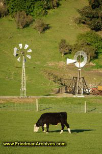 Cow and Windmills