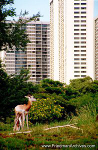 Deer near Buildings