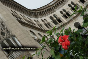 Flower in front of Islamic Arabian Architecture