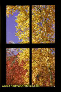 Foliage through 4-pane window