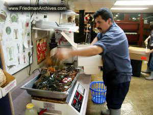 Guy Packing Lobster