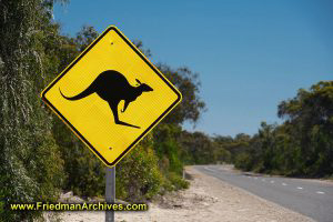 Kangaroo Crossing Sign