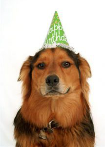 Kona in party hat (close)