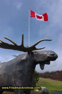 Moose Head with Canadian Flag