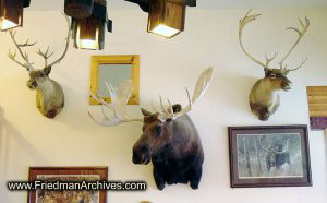 Moose and Deer Heads on Wall