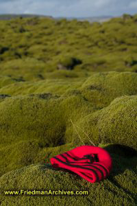 Moss and Red Hat
