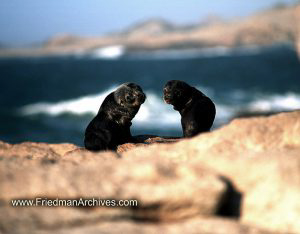 Namibia Images Baby Seals