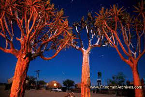 Namibia Images Eerie trees at night