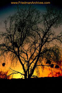 Namibia Images Fuzzy Tree Sunset
