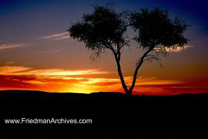 Namibia Images Split Tree Sunset