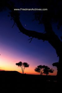 Vertical Namibian Sunset