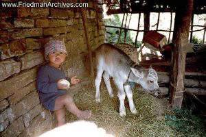 Nepal Images - Boy and Calf