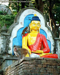 Nepal Images Buddha and Monkeys