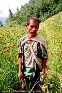 Nepal Images - Man in Field