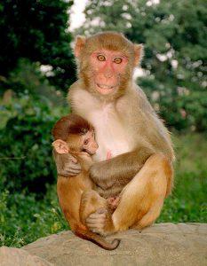 Nepal Images - Monkeys