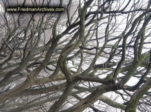 Central Park Tree Branches