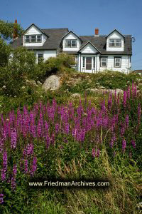 House and Purple Flowers