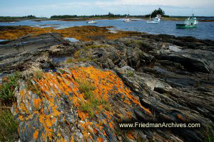 Orange Moss on a Rocky Shore (horizontal)