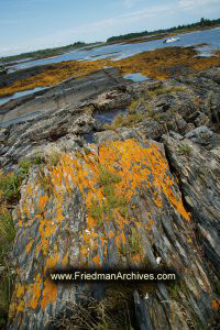 Orange Moss on a Rocky Shore (vertical)