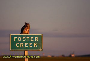 Owl on Foster Creek Sign
