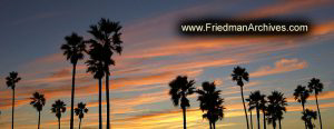 Palm Tree Sunset Banner