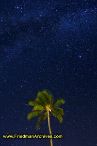 Palm Tree and Stars