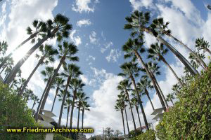 Palm Trees Galore - Welcome to Southern California!