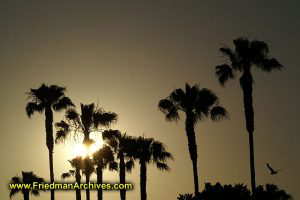 Palm Trees at Sunset - Horizontal
