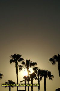 Palm Trees at Sunset - Vertical