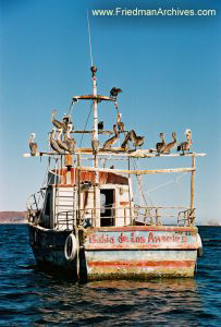 Pelicans on Boat (vertical)