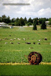 Round Thing on Pasture