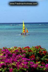 Sailboat, Blue Ocean, and Purple Flowers