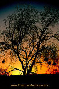 Fuzzy Tree Sunset