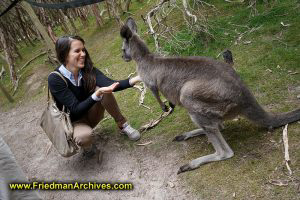 Tourist feeds a Kangaroo