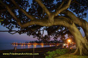 Tree in city at dusk