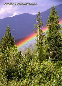 Trees and Rainbow