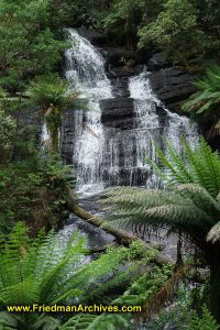 Waterfalls of Beech Forest Trail