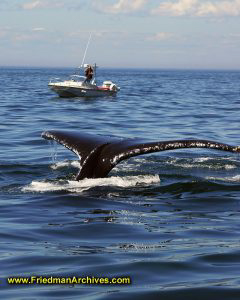 Whale Tail and Boat