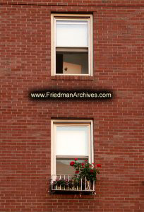 Windows-and-Flowers