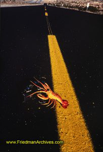 lobster,asphalt,road,black,yellow,minolta,XE-7,camera,
