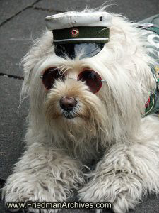 sunglasses,hat,dog,sitting,poleizi,germany,