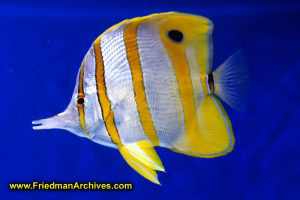 fish,tank,blue,water,yellow,white,pet,hobby,ocean