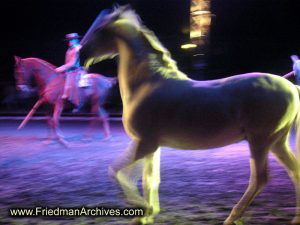 horse,circus,performance,prancing,trot,gallop,canter,